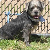 Adopt A Pet :: *PEPPER - Norco, CA