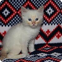 Adopt A Pet :: Warm Kitty - Mission, KS