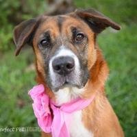 Adopt A Pet :: Hailey aka Carol - Miami, FL
