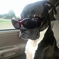 Adopt A Pet :: Princess - Seabrook, NH