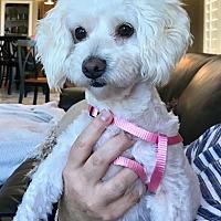 Adopt A Pet :: Roxy - Carlsbad, CA