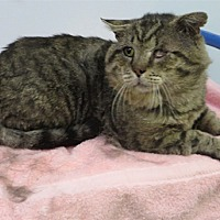 Adopt A Pet :: Patchie - Indiana, PA