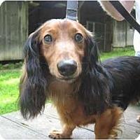 Adopt A Pet :: Angel - Killingworth, CT