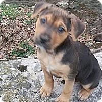 Adopt A Pet :: Baby Girl - Roaring Spring, PA
