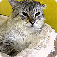 Adopt A Pet :: Toby - Medway, MA