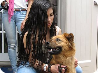 Chow Chow/German Shepherd Dog Mix Dog for adoption in Shelter Island, New York - Linda