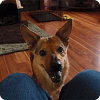 Adopt A Pet :: Gretchen - Madison, WI