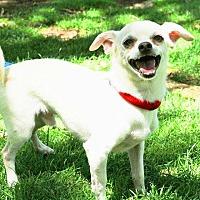 Adopt A Pet :: Bonzo - Rancho Cucamonga, CA