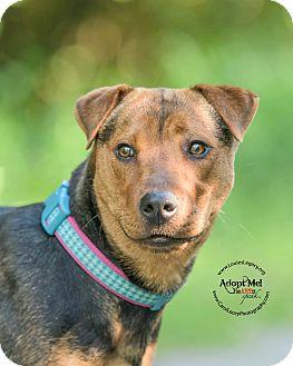 Shar Pei/German Shepherd Dog Mix Dog for adoption in Cincinnati, Ohio - Honeybell