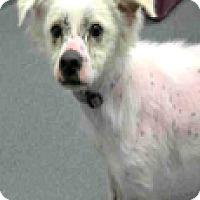 Adopt A Pet :: Astro-ADOPTION PENDING - Boulder, CO