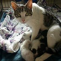 Adopt A Pet :: Esmeralda - Lancaster, CA