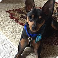Adopt A Pet :: Leo - Topeka, KS