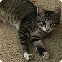 Adopt A Pet :: Lilo - Parkton, NC