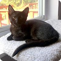 Adopt A Pet :: Holly - St. Louis, MO