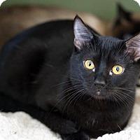 Adopt A Pet :: Savannah - Alameda, CA