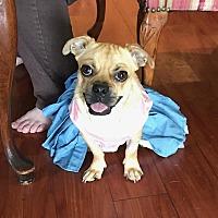Adopt A Pet :: Glodie Lola - Miami, FL