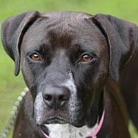 Adopt A Pet :: Remi - MEET ME @ PETCO 8-19! - Cookeville, TN