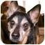 Photo 1 - Shiba Inu Mix Dog for adoption in Cincinnati, Ohio - Lucky
