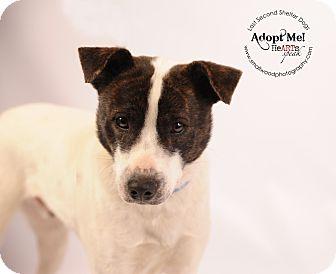 Terrier (Unknown Type, Medium)/Terrier (Unknown Type, Medium) Mix Dog for adoption in Wytheville, Virginia - Hank the Prankster
