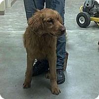Adopt A Pet :: Thumper - Denver, CO