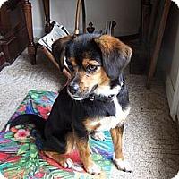 Adopt A Pet :: Rebekah-Courtesy Post - Dundas, VA