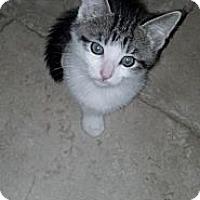 Adopt A Pet :: Ian - Sterling Hgts, MI