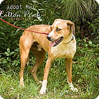 Adopt A Pet :: Leroy - Fort Valley, GA