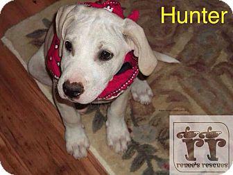 Labrador Retriever Mix Puppy for adoption in Hockessin, Delaware - Hunter