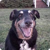 Adopt A Pet :: PEPPER - Wilmington, NC