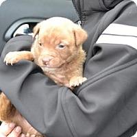 Adopt A Pet :: Buddy - ROME, NY