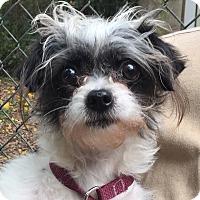 Adopt A Pet :: Pookie - Orlando, FL