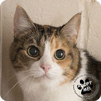 Domestic Shorthair Cat for adoption in Troy, Ohio - Ethel