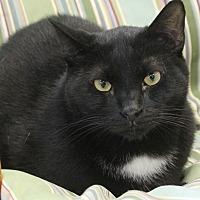Adopt A Pet :: Merlin - Richand, NY