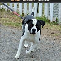 Adopt A Pet :: River - Norco, CA