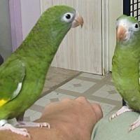 Adopt A Pet :: Frida & Lupe - Edgerton, WI