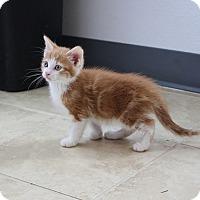 Adopt A Pet :: Edgar - Sparta, NJ