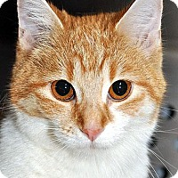 Adopt A Pet :: Chex - Fort Leavenworth, KS