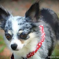 Adopt A Pet :: Betsy Ross - Barnesville, GA
