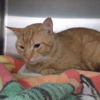 Adopt A Pet :: Simba - Williamsport, PA