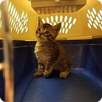 Adopt A Pet :: Freddy - Spring, TX