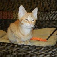 Adopt A Pet :: Arabelle - Jackson, MI
