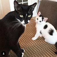 Adopt A Pet :: Maisy & Starlee - Los Angeles, CA