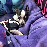 Adopt A Pet :: Hyatt - PHOENIX, AZ