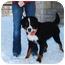 Photo 2 - Bernese Mountain Dog Dog for adoption in Mount Gilead, Ohio - Jacob