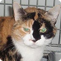 Adopt A Pet :: Ginny - Germansville, PA