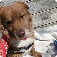 Adopt A Pet :: Kywee - Phoenix, AZ