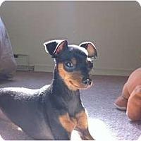 Adopt A Pet :: Alice - Toronto/Etobicoke/GTA, ON