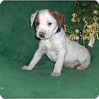 Adopt A Pet :: Jack - Clayton, OH