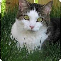 Adopt A Pet :: Kiefer - Xenia, OH