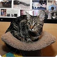 Adopt A Pet :: Daria - Farmingdale, NY